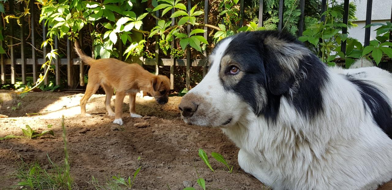 Nawiedzony pies, czyli Joszko movie #23