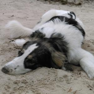 Hel, czyli urlop pod psem – dzień pierwszy – Joszko movie #5