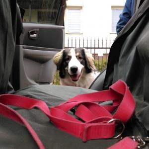 Jak zapuszkować psa